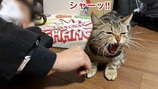 妹のお昼寝を自分から邪魔したくせに怒られて逆ギレする猫w