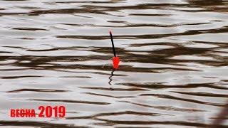 Рибалка 2019 навесні Ловля карася на поплавок навесні КАРАСЬ ЛІЗЕ НА БЕРЕГ