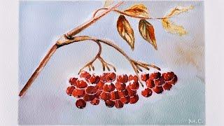 "Акварель ""рябина под снегом""  Watercolor rowan berry drawing"