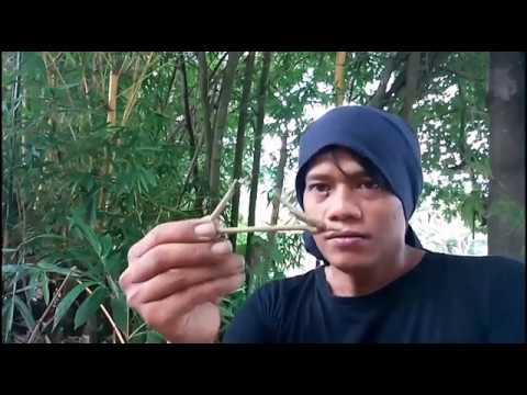 Pusaka Misterius Tertimbun Di lokasi Perburuan Bambu Petuk.. PRING PETUK