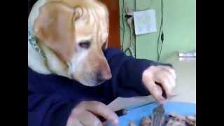 Собака с человеческими руками!!! Ржач!!!!