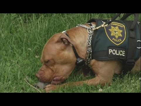 Meet Leonard: Ohio's First Pit Bull Police Officer