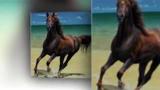 Кони... кони