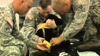 K9 First Aid Training