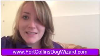 Fort Collins Unruly Dog Contest Boulder Denver Trainer Trainers