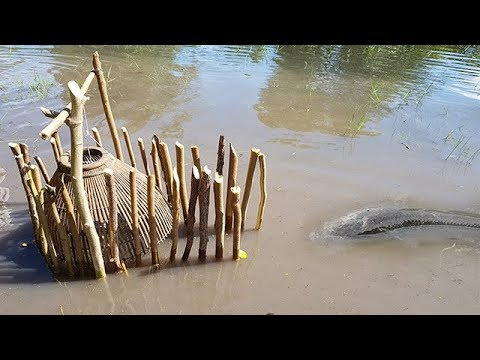Man make fish trap to catch fishes at rice field near big for How to make a fish trap for big fish