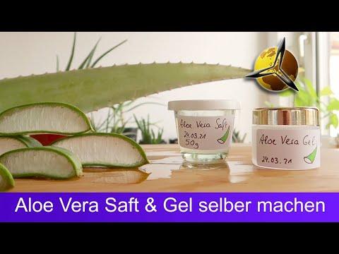 Aloe Vera Gel und Saft selber machen
