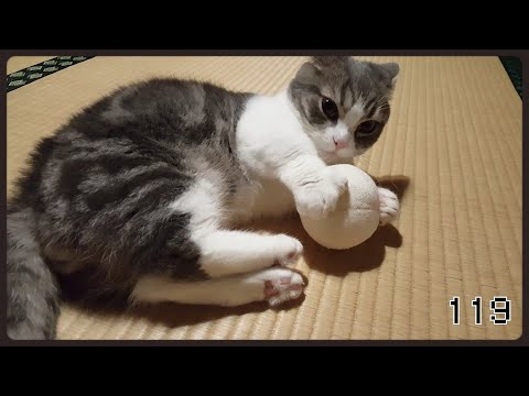 猫のおもちゃで遊んでみた② ~I played with a cat toy②~