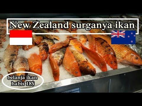 Eps.19 New Zealand Surganya Ikan # Auckland Fish Market