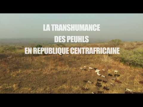 La Transhumance des Peuhls en Republique Centrafricaine
