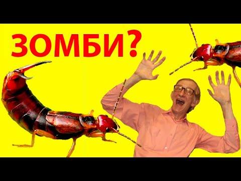 Вопрос: Существуют ли у насекомых – гениталии или нет Почему?