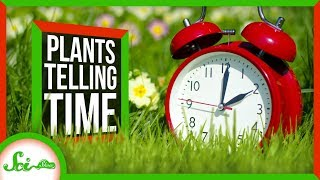 How Plants Tell Time