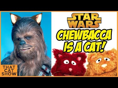 Chewbacca from Star Wars is a Cat! - Funny Cat Video - That Cat Show