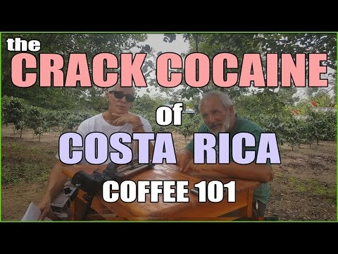 EVERYTHING Coffee of Costa Rica the Low Down