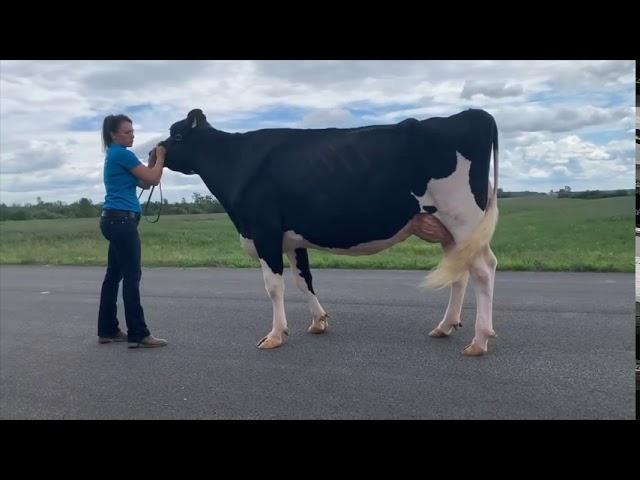 Jugement Virtuel Holstein Québec - version française