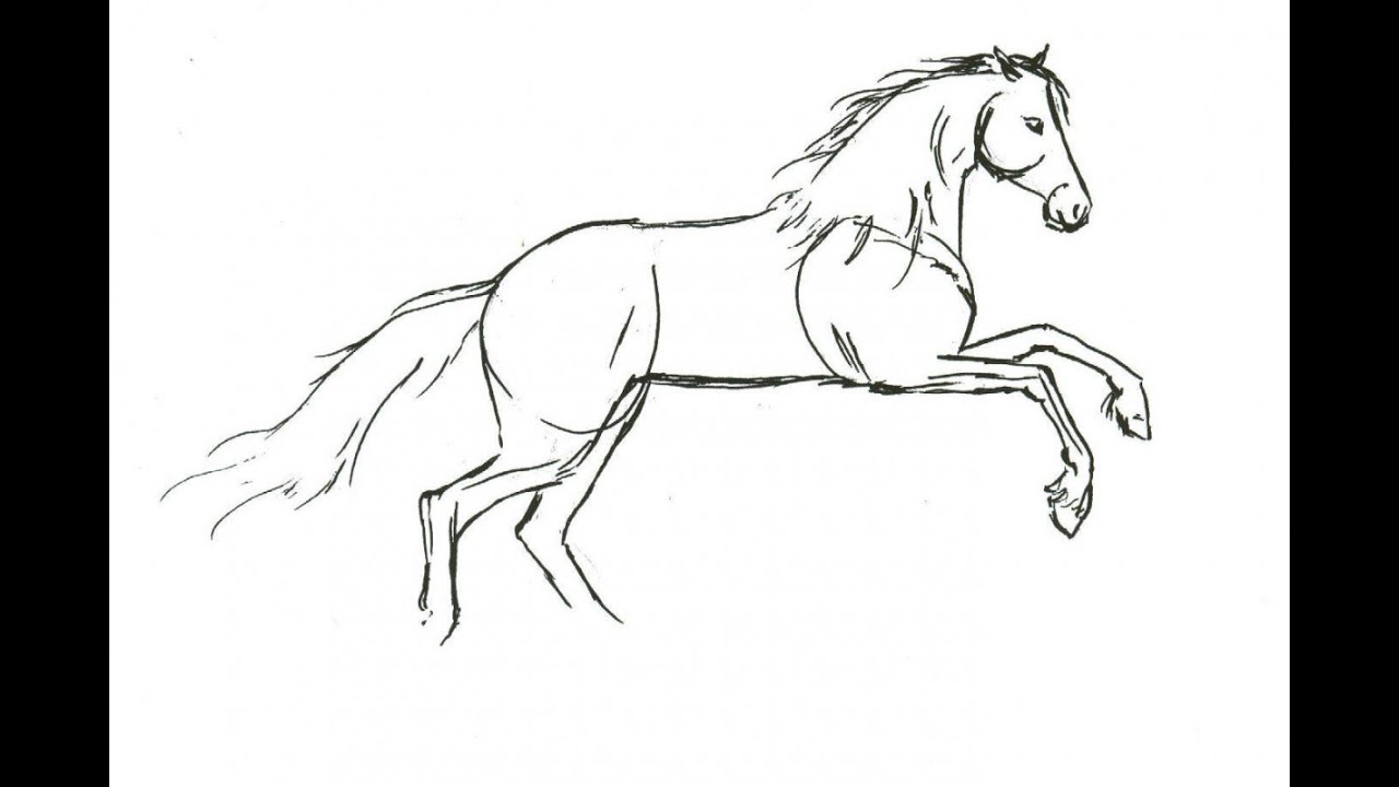 How To Draw A Horse (step By Step) (easy) Youtube