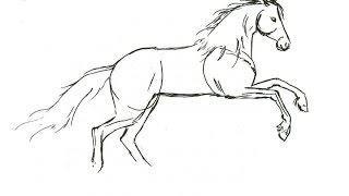 easy horse draw step horses drawings trace drawing