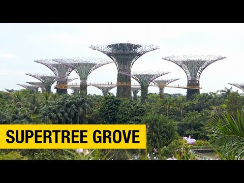 A Tour Of Gardens By The Bay In Singapore: Part 1 – Supertree Grove