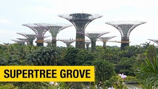 Gambar cover A Tour of Gardens by the Bay in Singapore: Part 1 – Supertree Grove