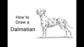 How to Draw a Dog (Dalmatian)