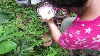 Huellas de Jaguar - Quebrada Ancha