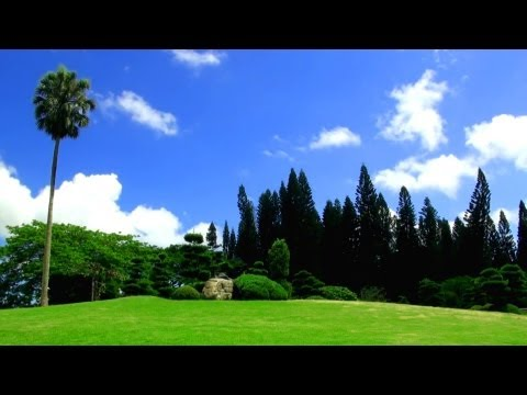 Relaxing Music + Over 100 Exotic Landscapes Nature Sounds - Relax TV, 3 Hours!