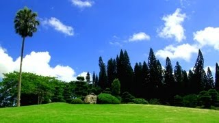 Download Relaxing Music + Over 100 Exotic Landscapes Nature Sounds - Relax TV, 3 Hours! Mp3 and Videos