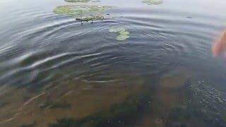 Jig-fishing.ru Язь на 735гр. Отпускайте рыбу)(Контактная информация Телефон +7 (495) 543-87-86 Мобильный +7 (929) 969-24-25, +7 (910) 5714202 Эл. почта deronkelbose@yandex.ruПодтвердить., 2016-02-04T19:41:39.000Z)