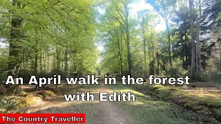 An April walk in The New Forest with Edith, the miniature schnauzer with quiet background music