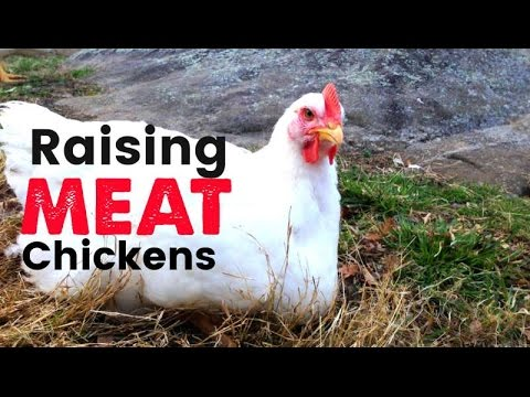 Raising Meat Chickens on the Homestead