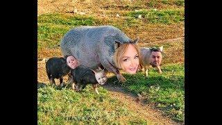 Свиноматка из Донецка: Растолстевшая Пынзарь подбивает семью на нездоровый образ жизни