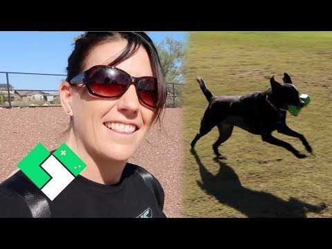 Let's Go To The Dog Park! | Clintus.tv