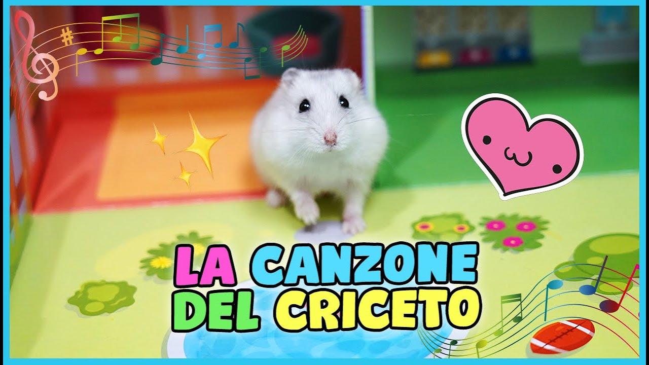 Download 🐹 LA CANZONE DEL CRICETO 🐹 Dipper Song