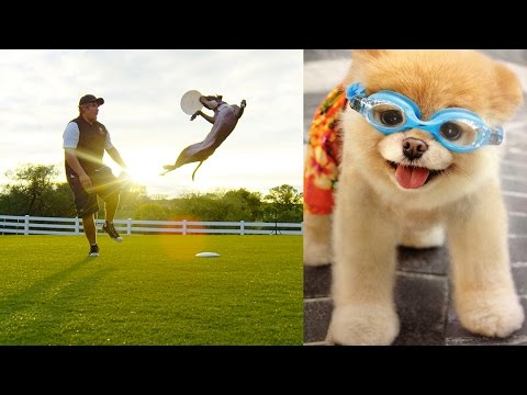 World's Most Amazing Dogs in Super Slow Motion! Incredible Dog Challenge in 4K! | DEVINSUPERTRAMP