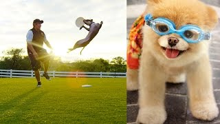 World's Most Amazing Dogs in Super Slow Motion! Incredible Dog Challenge in 4K!