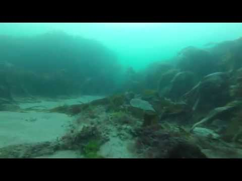 Meadfoot Beach Dive