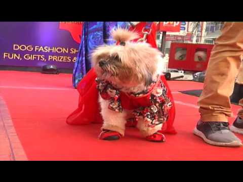 DOG FASHION SHOW IN VIJAYAWADA