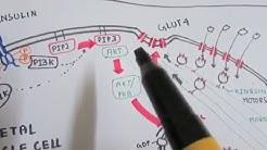 hqdefault - Molecular Mechanism Of Diabetes