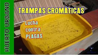 #HuertoUrbano. Control de plagas. Trampas cromaticas