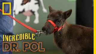 Reindeer Games - Season 2, Episode 4 | Barnyard Babies with Dr. Pol