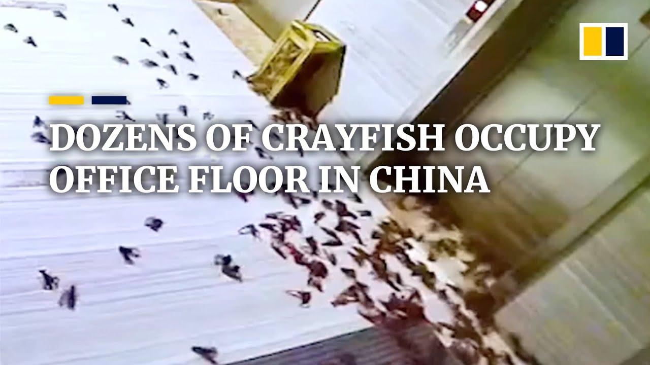 Dozens of crayfish occupy office floor in China