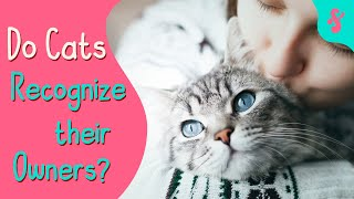 Do Cats Recognize their Owners?   Furry Feline Facts