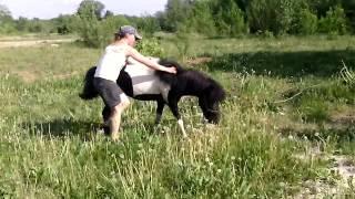 Конь или Понь? Девы - садитесь смело
