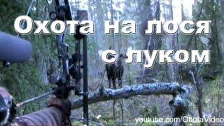 Охота на лося с луком на реву