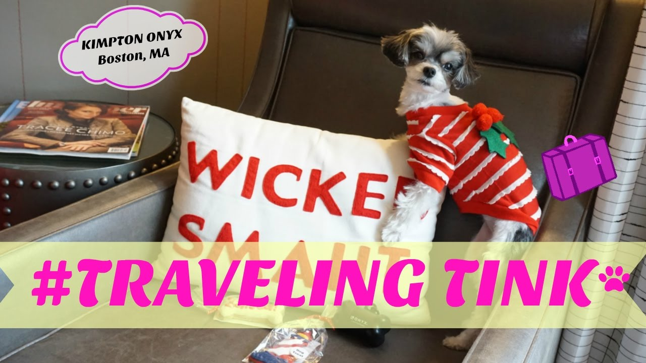 #TravelingTink - Tinkerbelle the dog visits the Kimpton Onyx Hotel in  Boston, MA