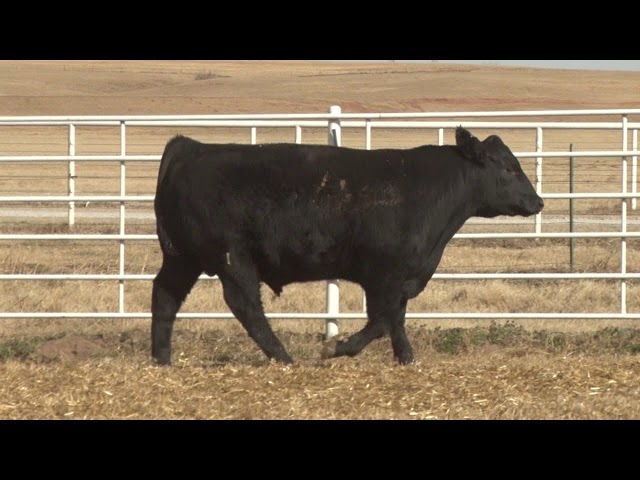 Express Ranches Lot 458