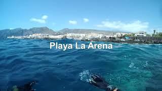Freediving South Tenerife 2018