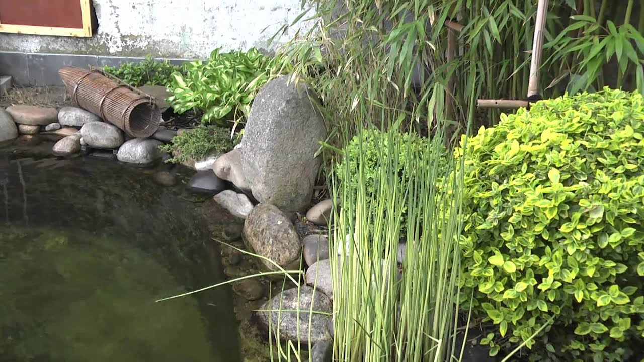 Le jardin et bassin japonais de stafsan youtube for Bassins de jardin photos