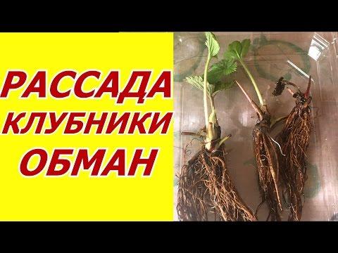 Милейшая Камнеломка ! Выращивание и размножение !из YouTube · Длительность: 5 мин32 с  · Просмотры: более 15.000 · отправлено: 22.06.2016 · кем отправлено: Яна Федорова