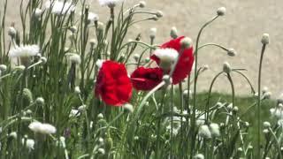 Nu Flute - Relaxing Calm Music -Kelvin - Copyright Free Music + Video - Meditation Calm Music